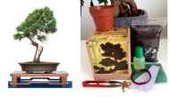 Chinese Juniper Bonsai Kit MEGA KIT- Soil/Pots/Seeds2x/Wire/Fertilzer/Mesh/Tool